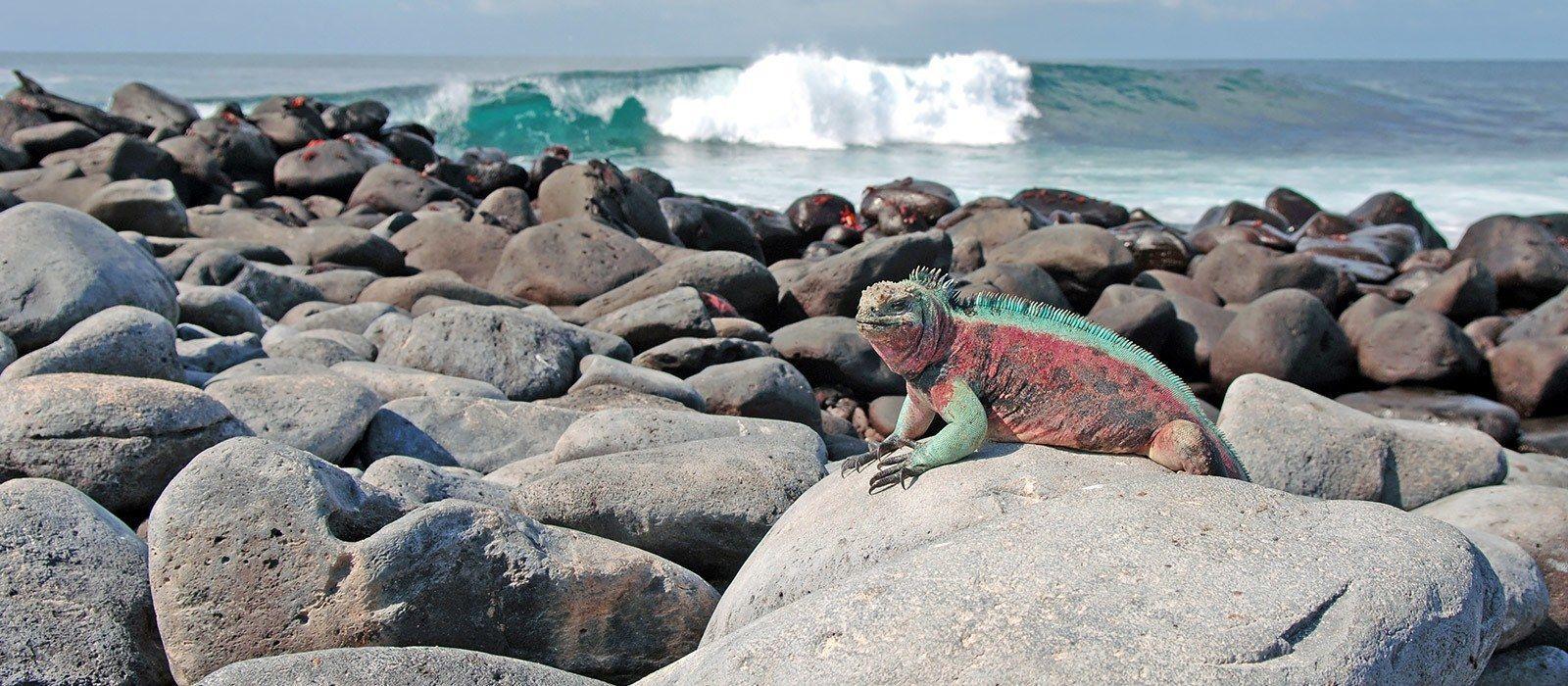 Ecuador & Galapagos – Darwin und Traditionen Urlaub 2
