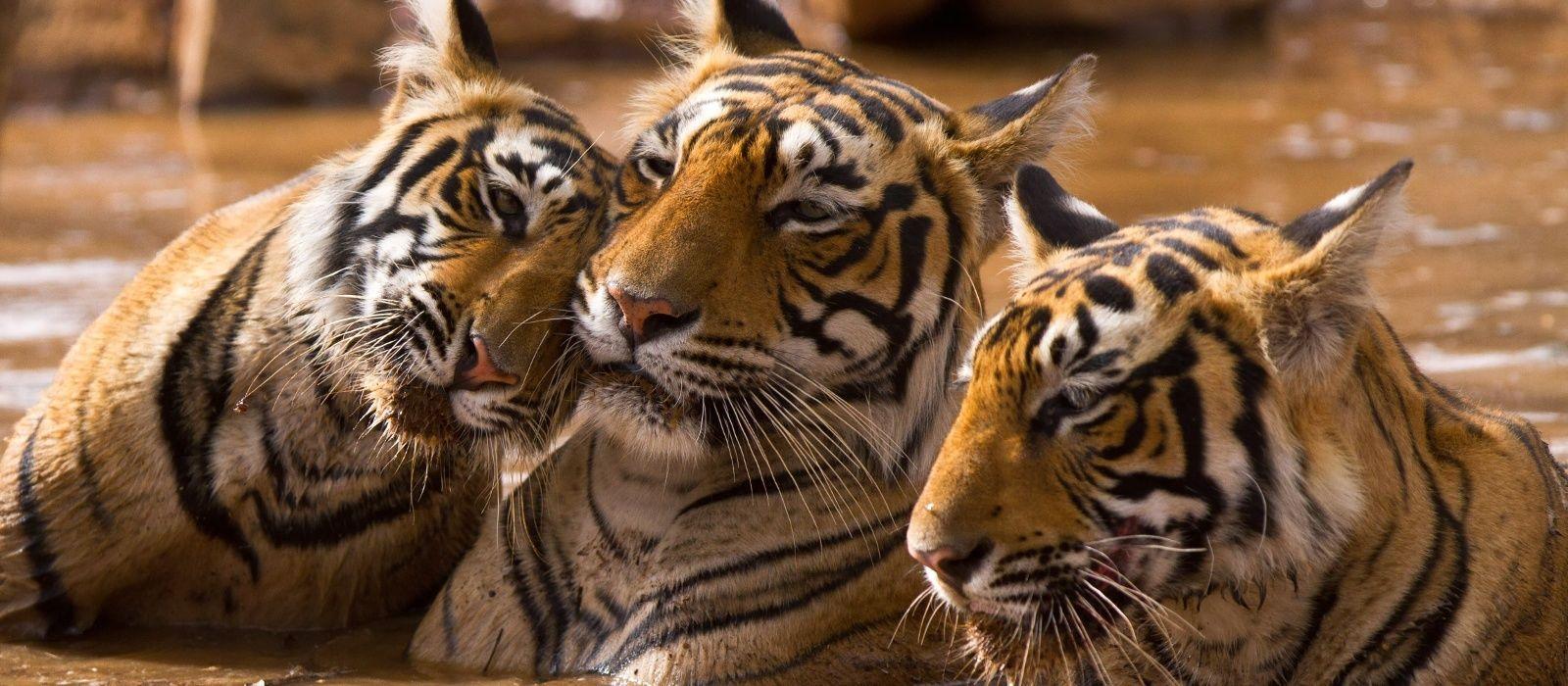 Südindien: Gewürzduft und Artenvielfalt Urlaub 6