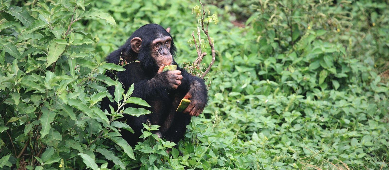 Uganda Safarireise – Primaten und bezaubernde Landschaften Urlaub 1
