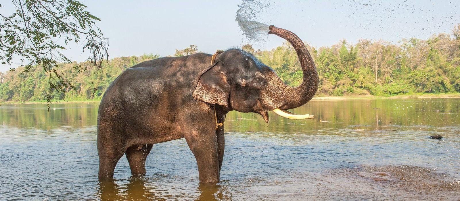 Südindien: Gewürzduft und Artenvielfalt Urlaub 3