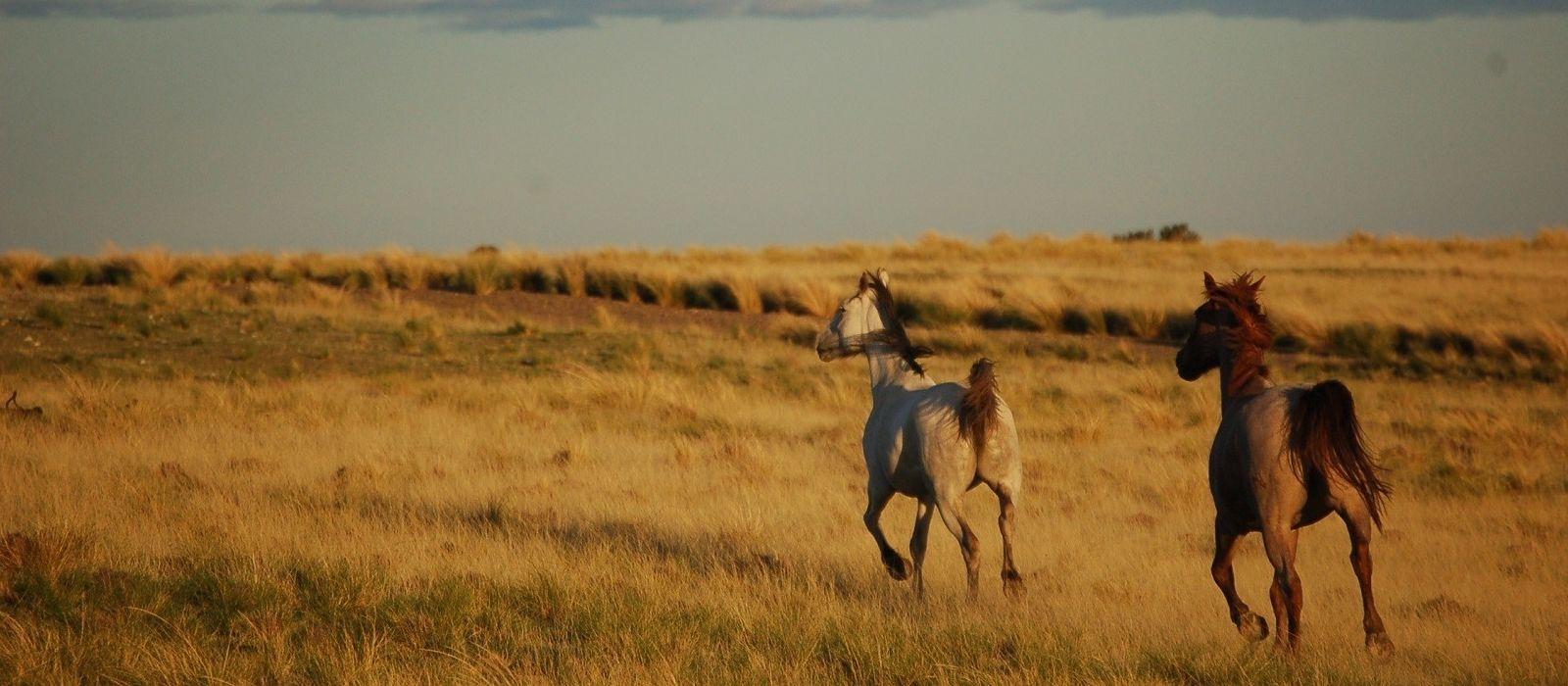 Argentinien Rundreise – Höhepunkte neu entdeckt Urlaub 3
