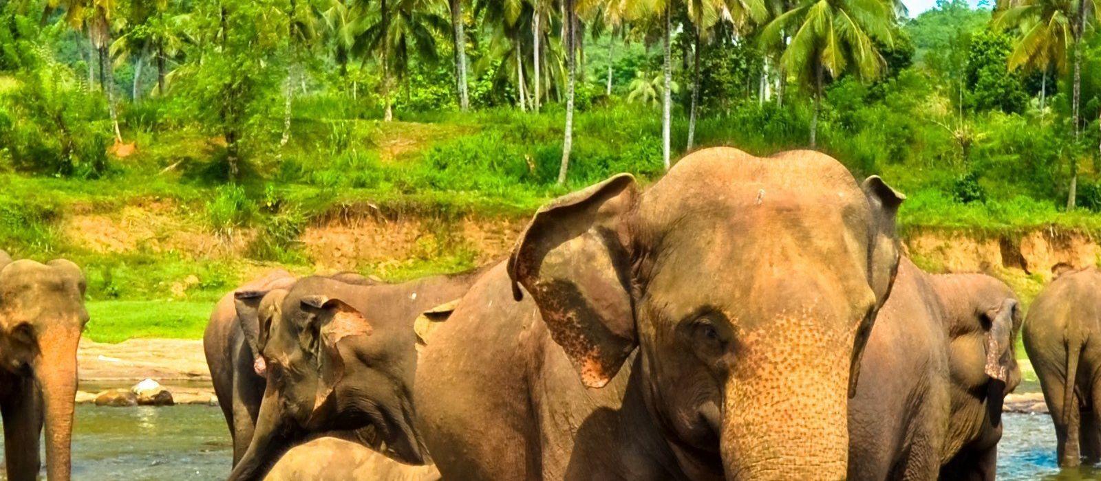 Sri Lanka: Reise zur Heimat des berühmten Ceylon-Tees Urlaub 5