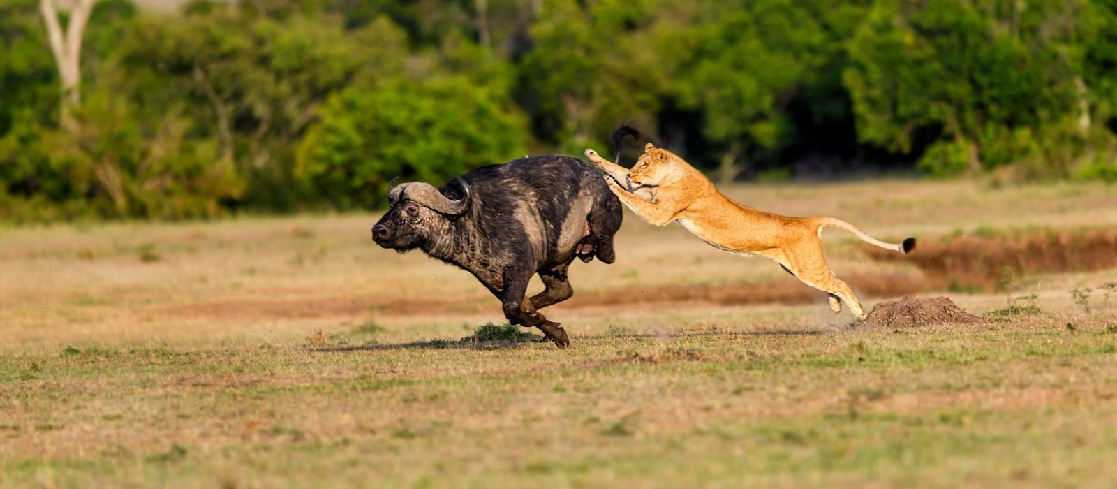 Kenia: Masai Mara, Wandersafaris & Traumstrände Urlaub 3