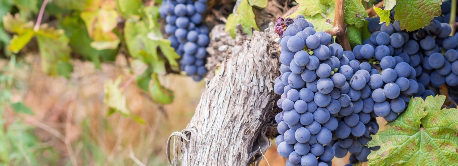 Dine with South Africa's Winemakers​ Tour Trip 2