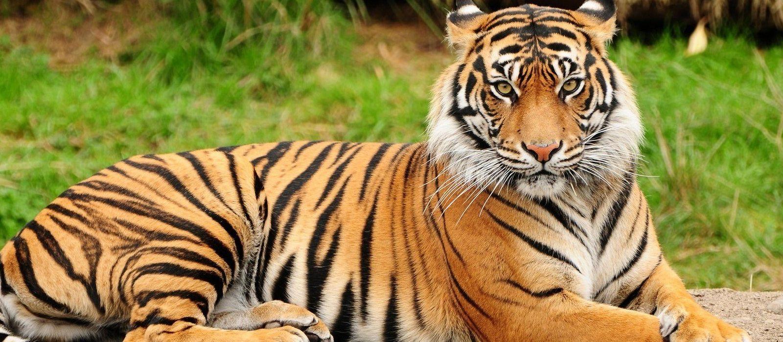 Metropolen & Safaris – Auf Tigers Fährte durch Indien Urlaub 1