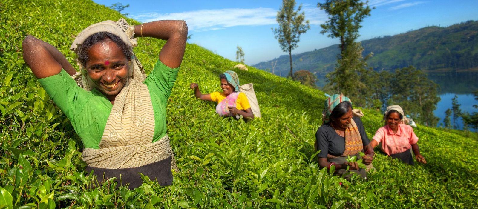 Sri Lanka: Reise zur Heimat des berühmten Ceylon-Tees Urlaub 1