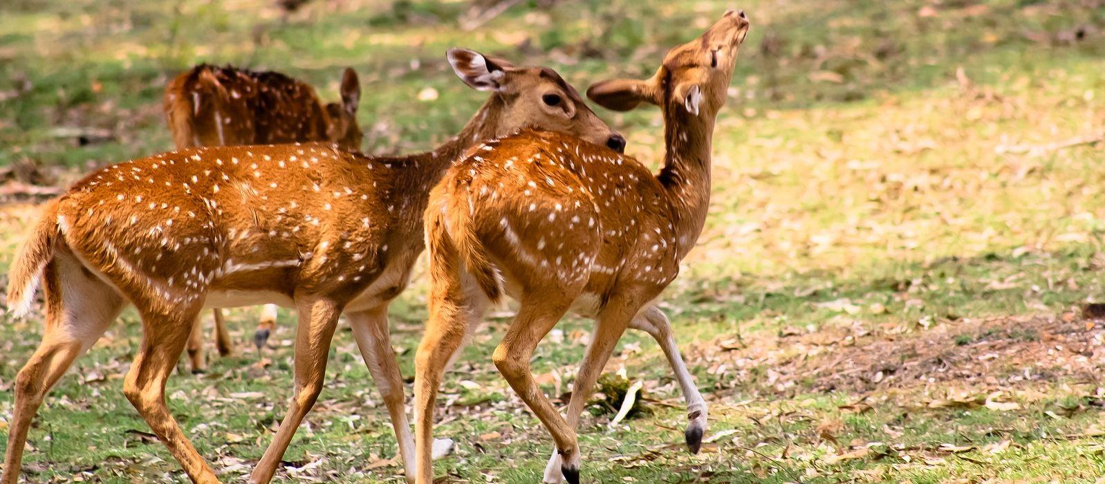 South Indian Splendor – Palace, Hills, Temples & Backwaters Tour Trip 3