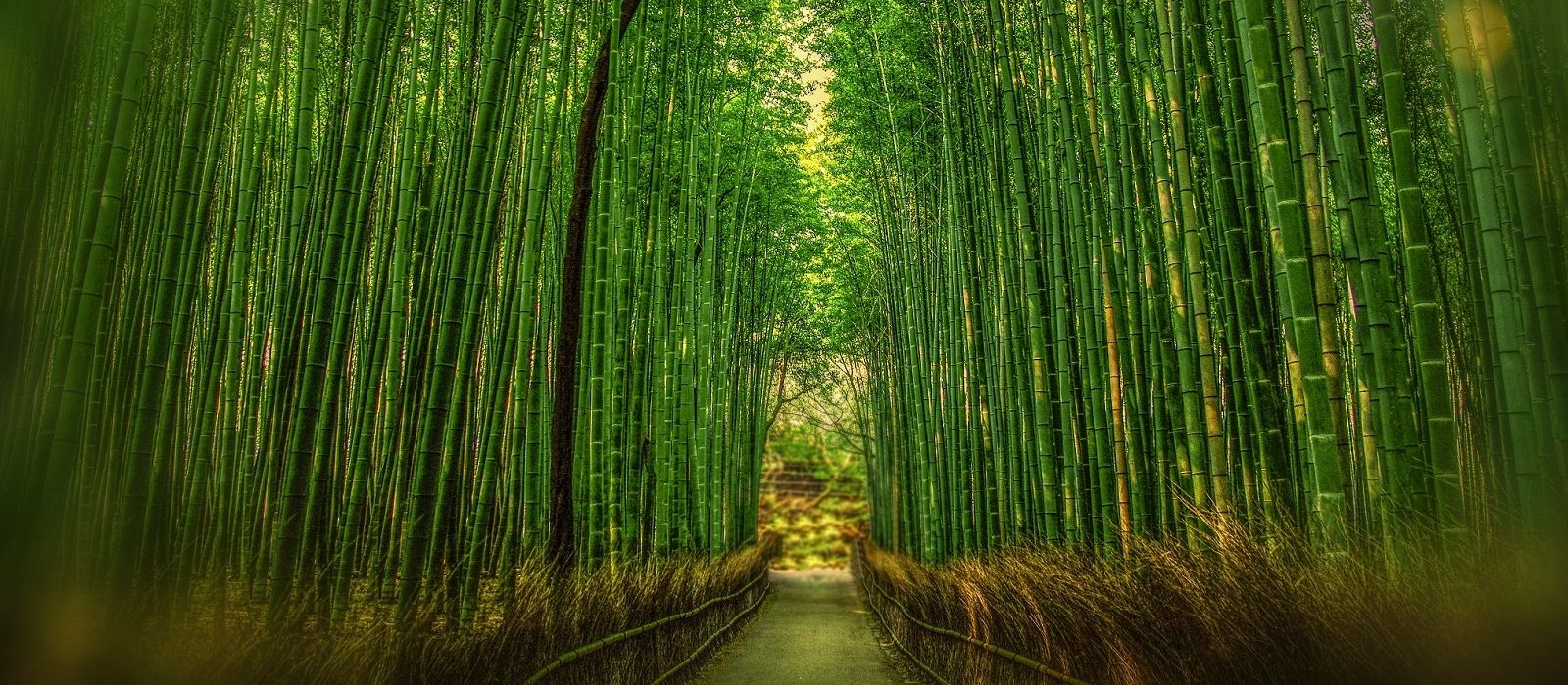 Highlights of Japan Tour Trip 2