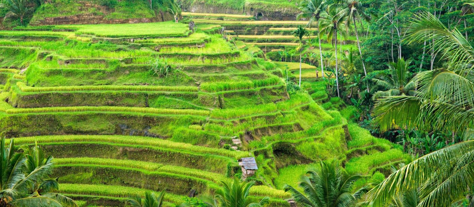 Indonesien: bezauberndes Bali, ländliches Lombok & Gili-Inseln Urlaub 1