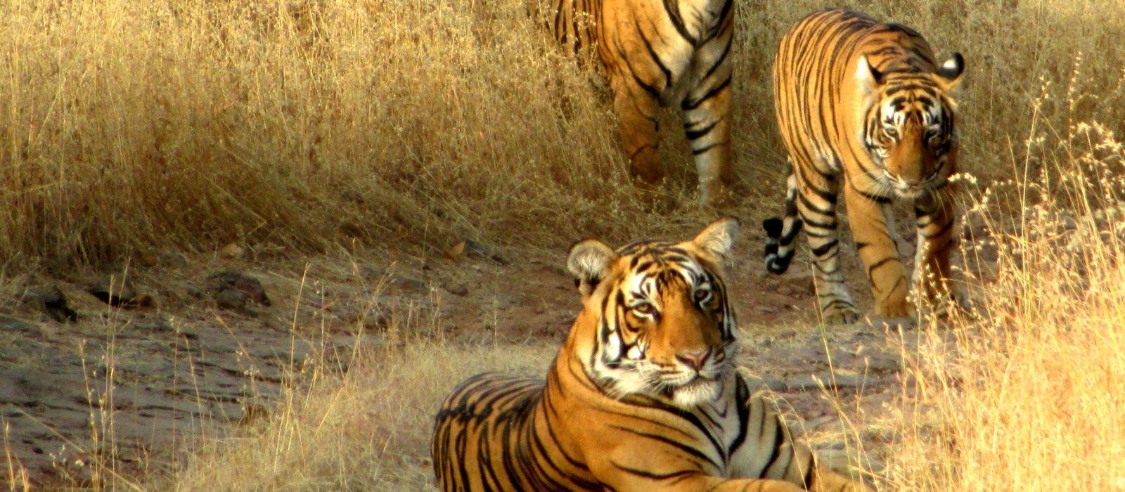 Auf den Spuren der Maharadschas – Kultur, Geschichte und Natur Urlaub 4