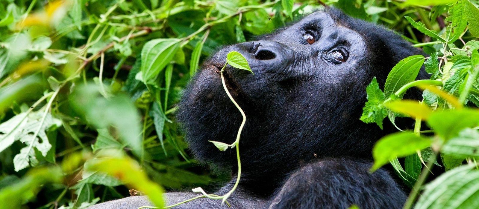 Reiseziel Bwindi Uganda
