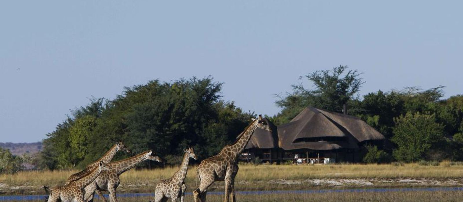 Hotel Chobe Savanna Lodge Botswana