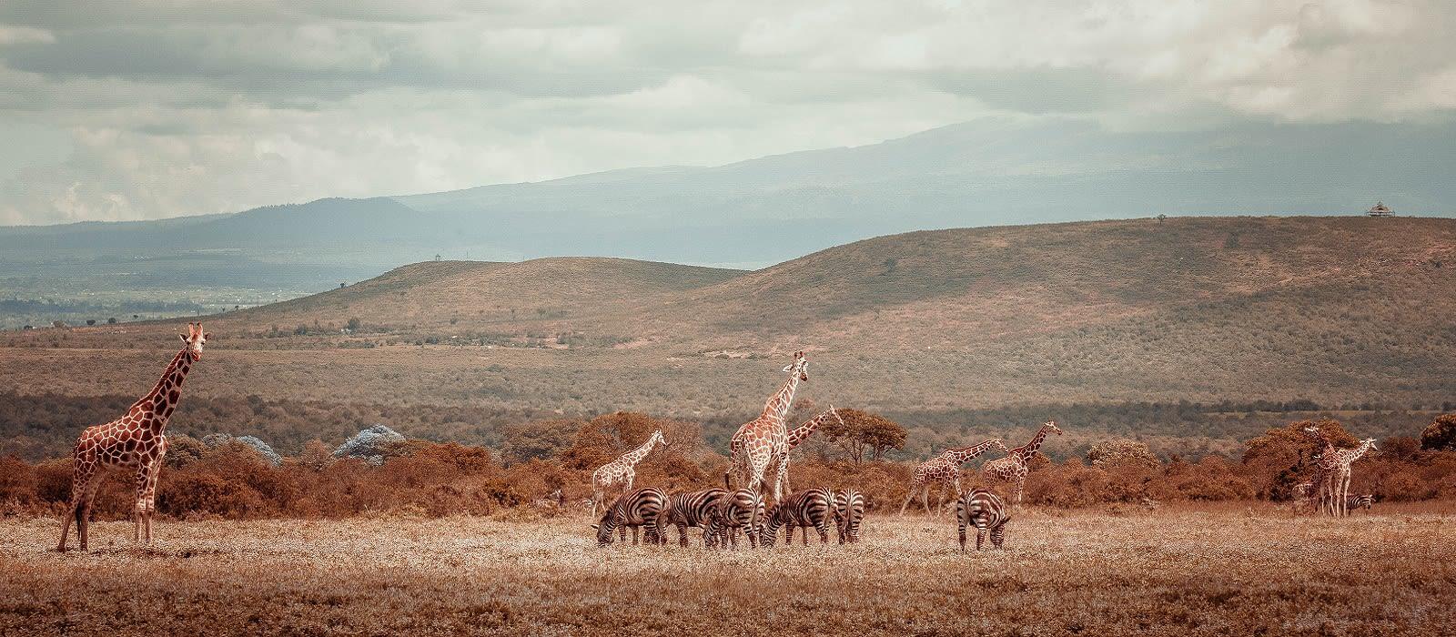 Destination Aberdares Kenya