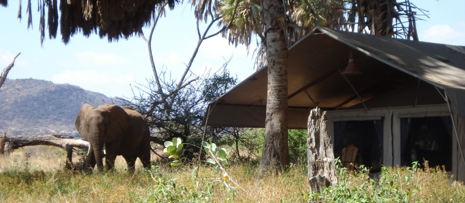Hotel Elephant Bedroom Camp Kenya