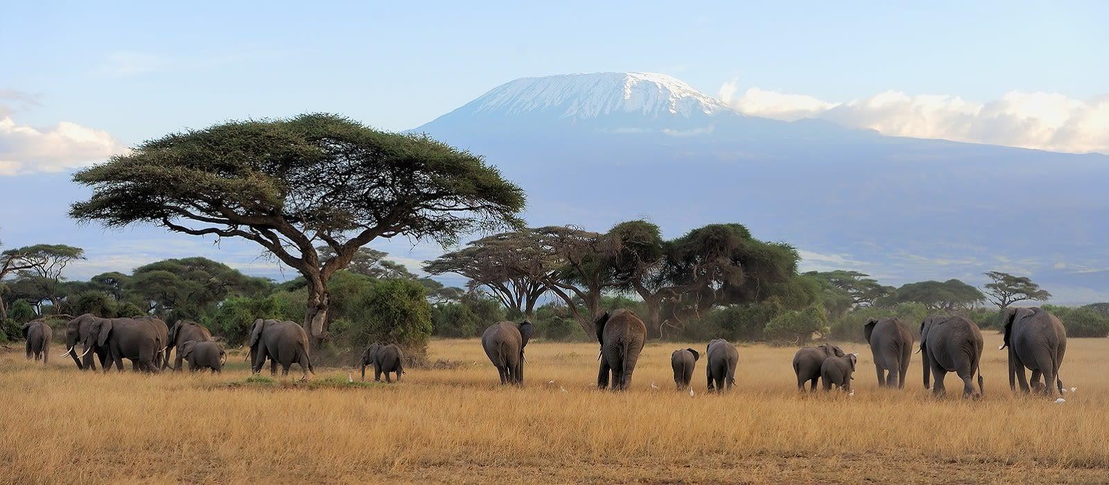 Wild Treasures of Northern Tanzania Tour Trip 4