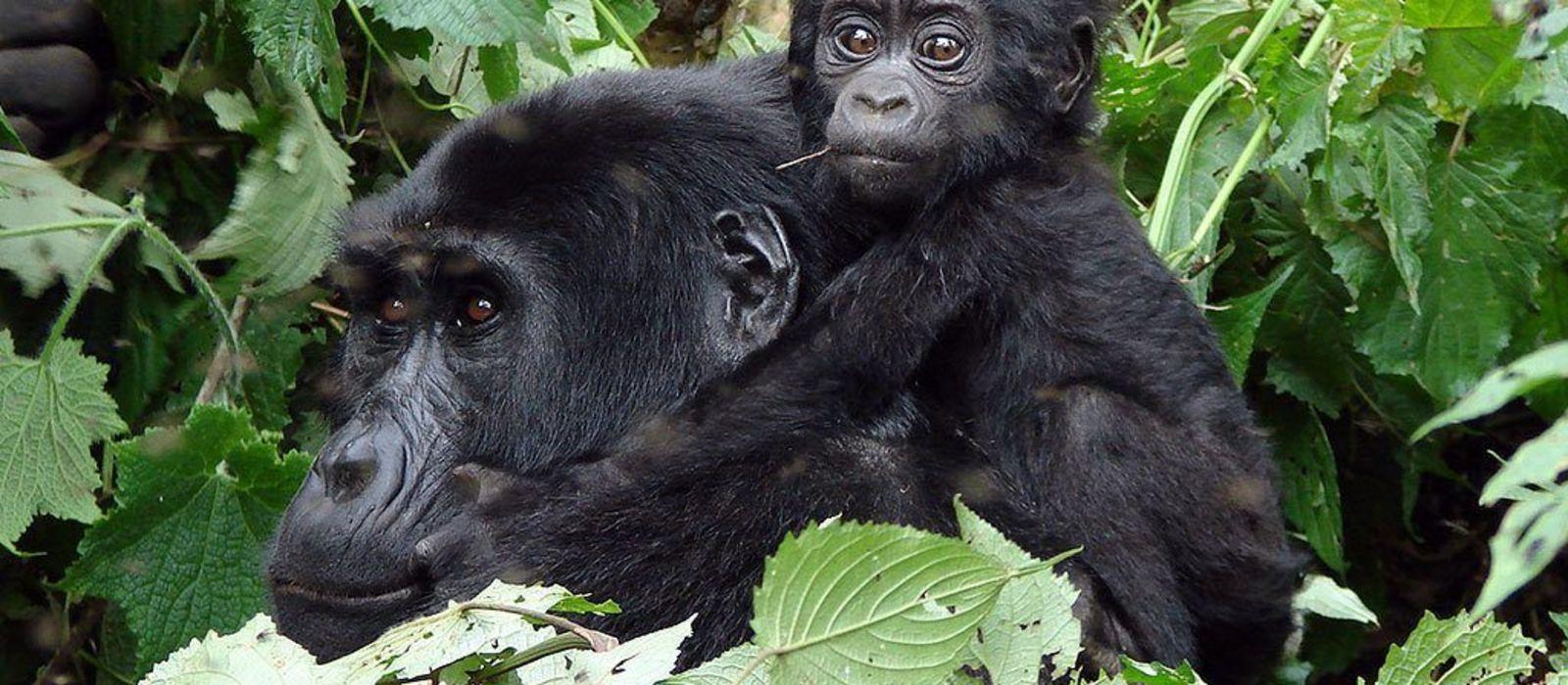 Gorillas, Great Migration and Indian Ocean Dreams Tour Trip 4