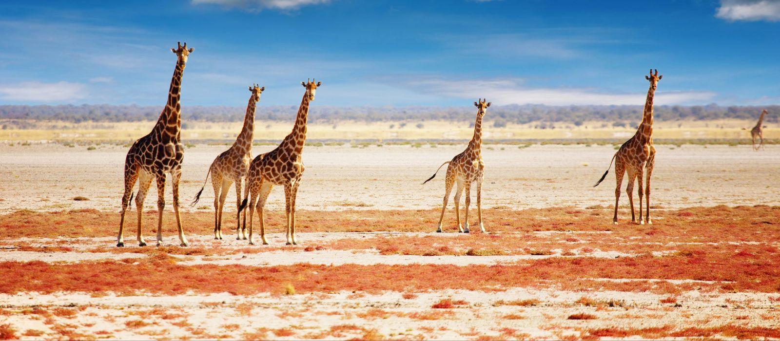 Namibia Luxusreise für Entdecker Urlaub 3