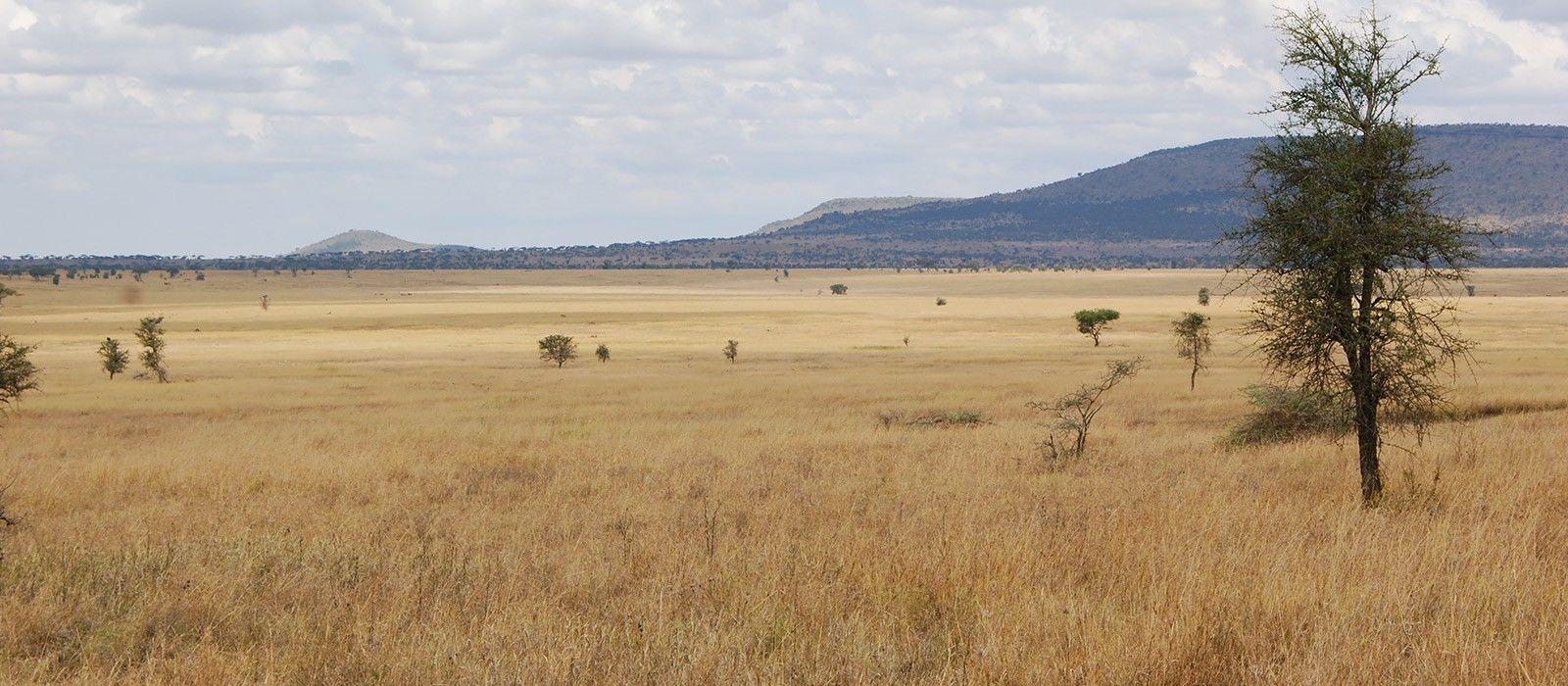Hotel Nieleze Serengeti Camp Tanzania