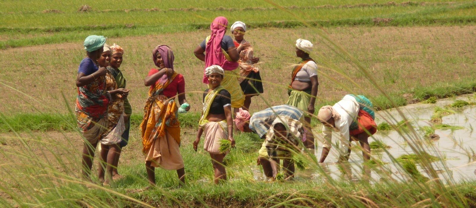 Ein Sommer in Südindien Urlaub 3