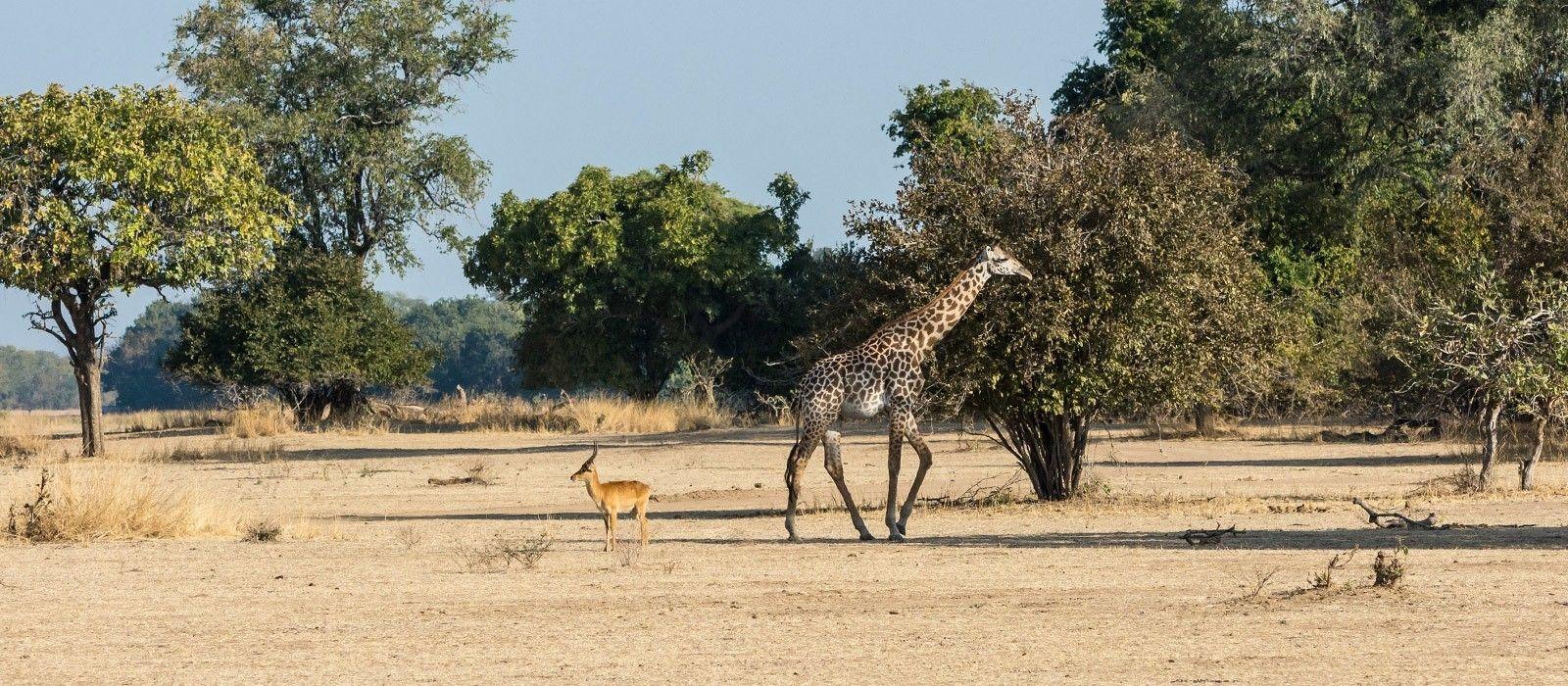 Reiseziel South Luangwa Sambia