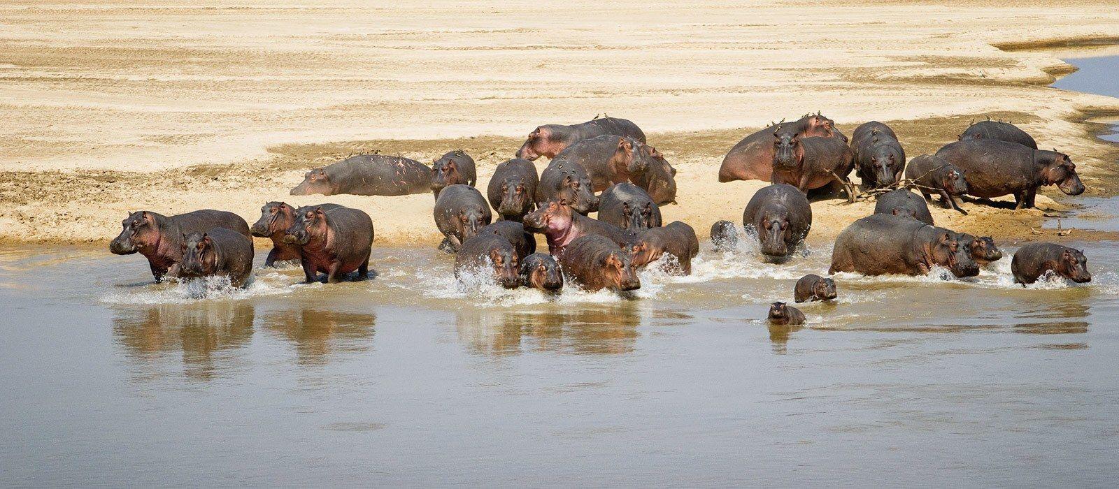 Auf Safari durch Sambia – weite Landschaften & wilde Tierwelt Urlaub 1