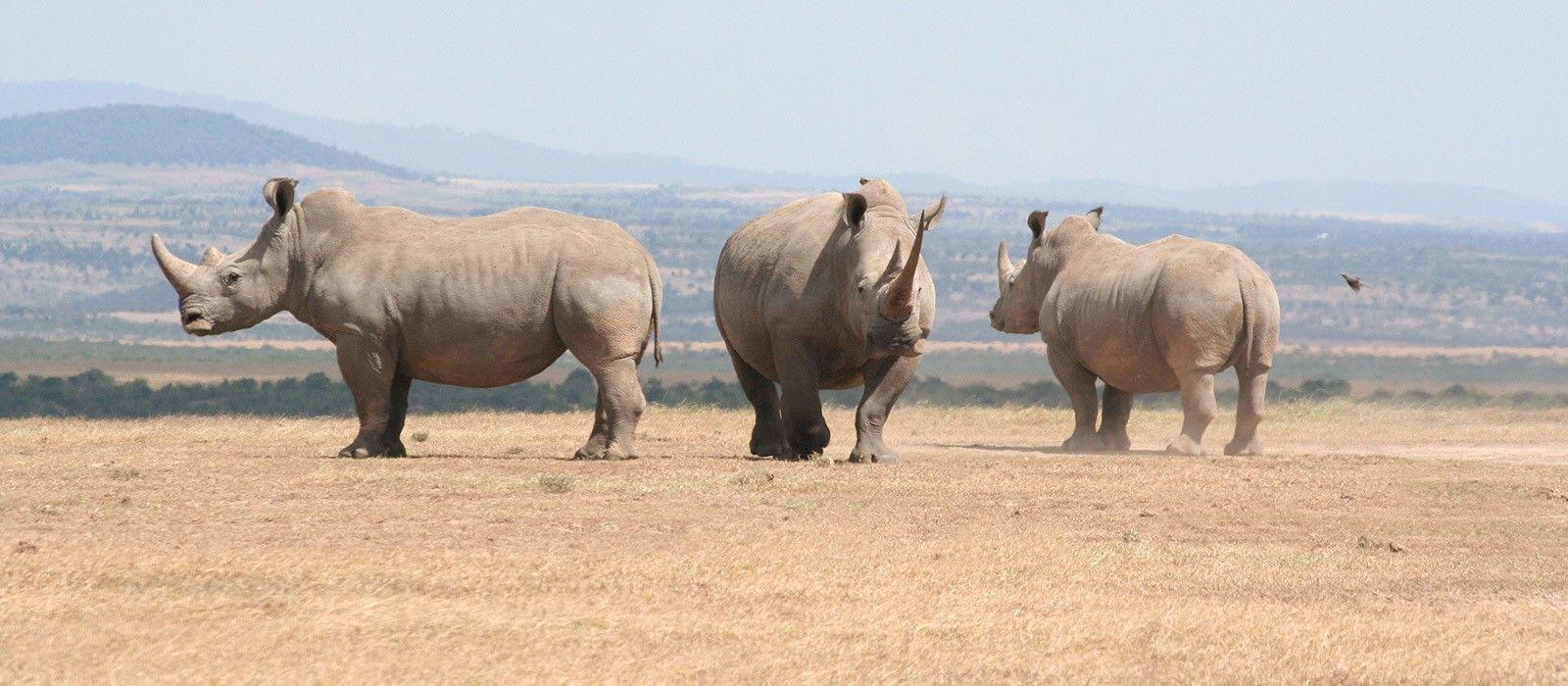 Destination Meru National Park Kenya