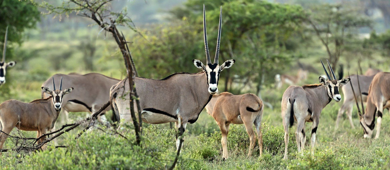 Wildes Kenia – Luxus Safari Reise Urlaub 2