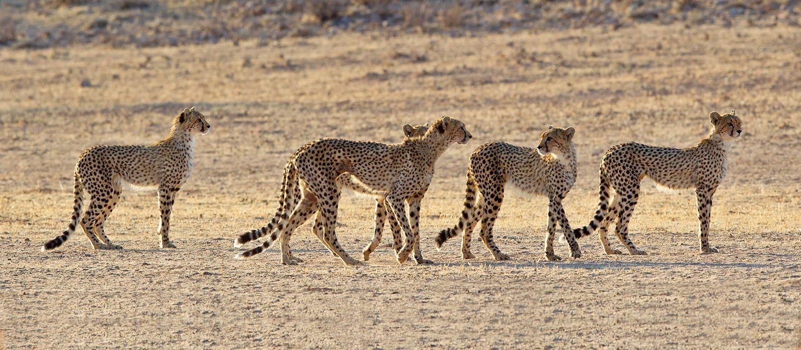 Reiseziel Kalahari Wüste (Nambia) Südafrika