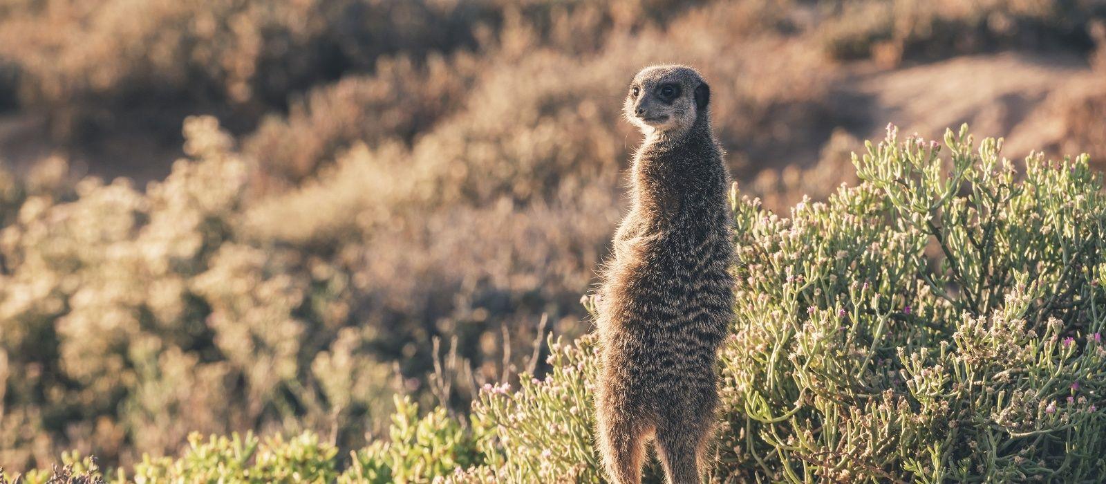 Botswana: Abenteuerreise ins Land der Kontraste Urlaub 5