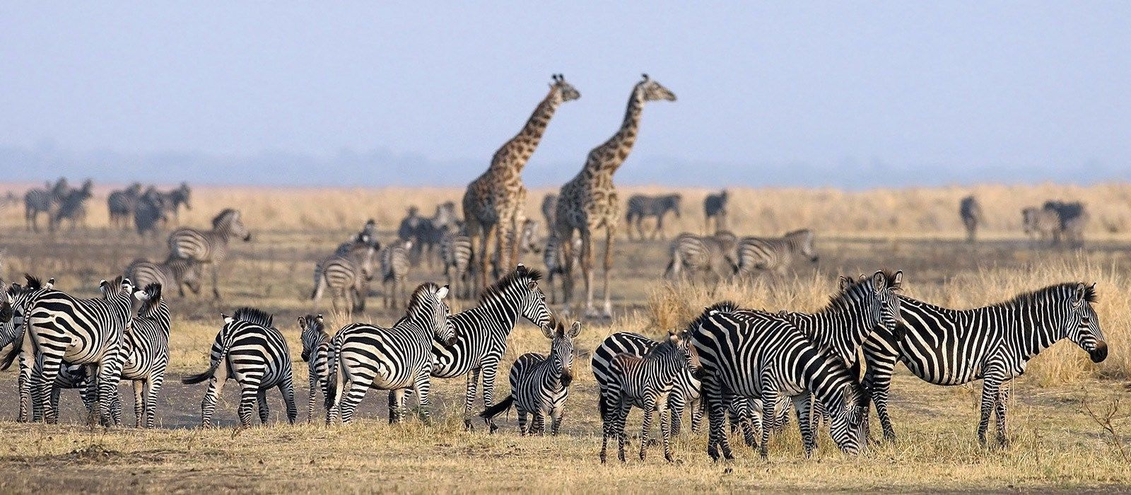 Luxury in Tanzania: Wilderness & Wildlife Tour Trip 7