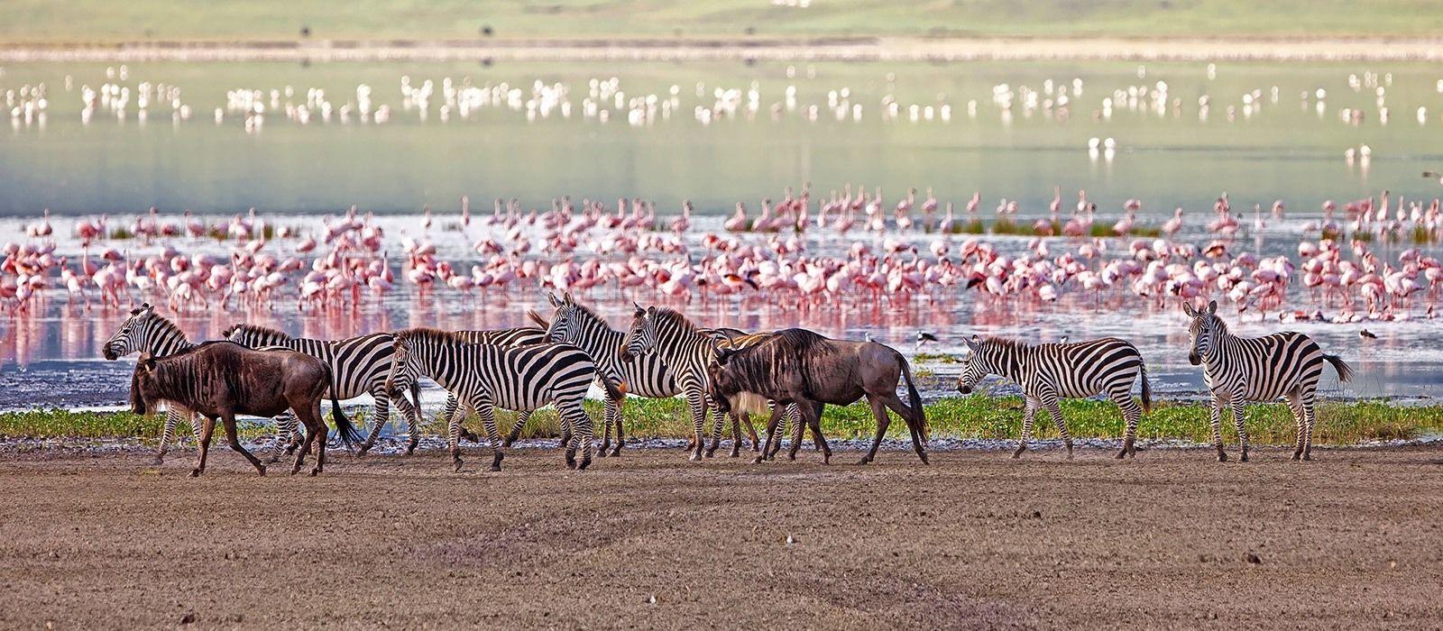 Luxus am See, Wildnis und wilde Tiere in Tansania Urlaub 4