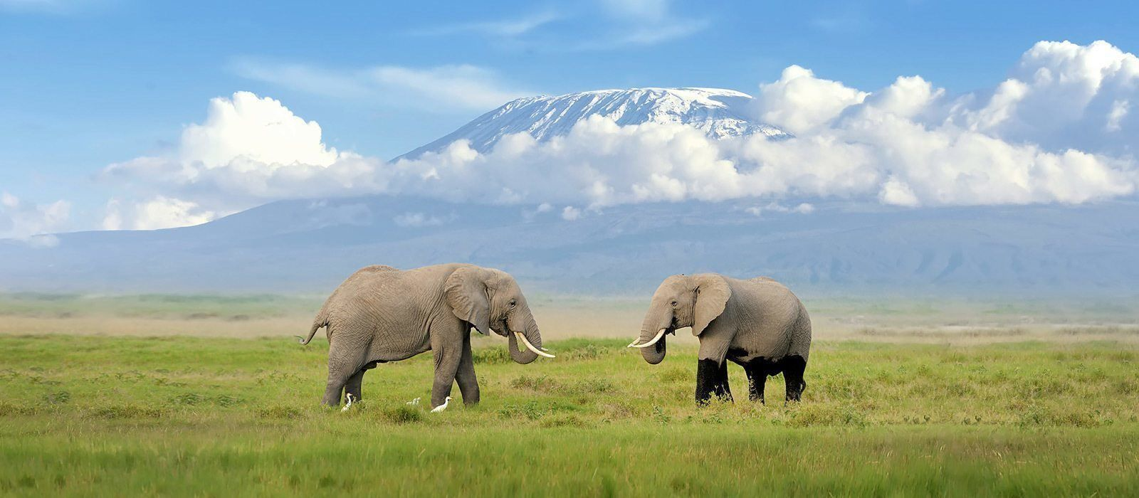 Reiseziel Mount Kilimanjaro Tansania