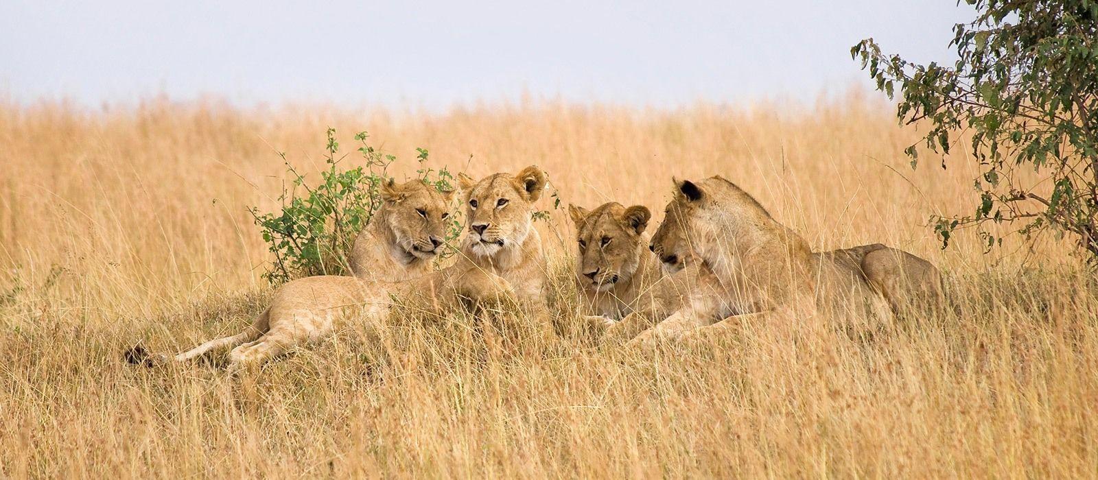 Reiseziel Nördliche Serengeti Tansania