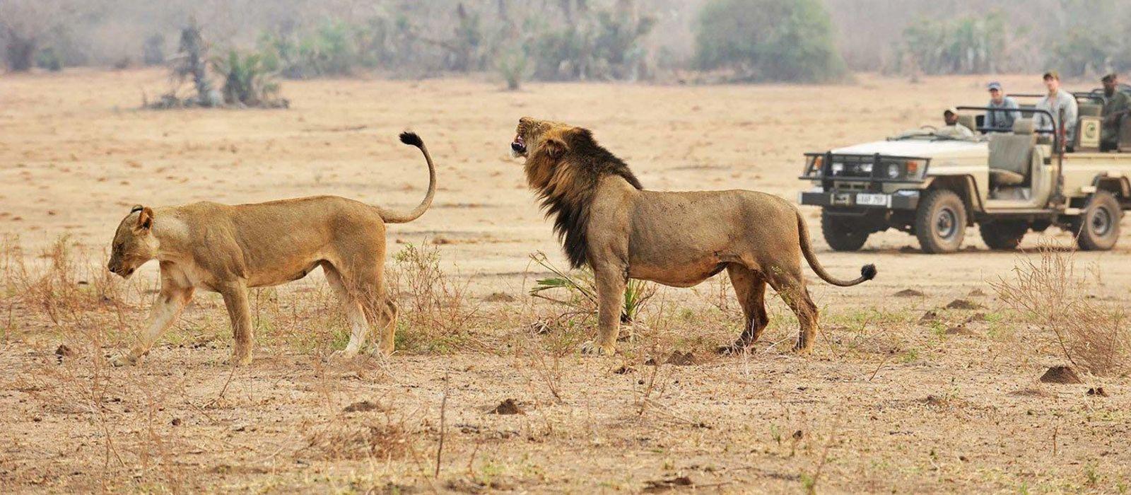 Reiseziel Ruaha Tansania