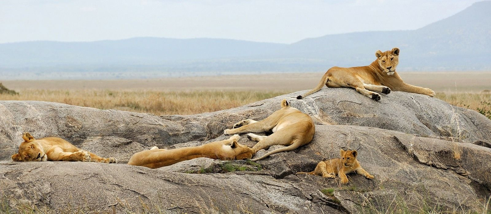 Luxury in Tanzania: Wilderness & Wildlife Tour Trip 10