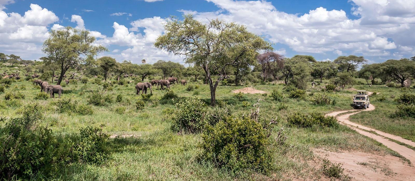 Destination Tarangire Tanzania