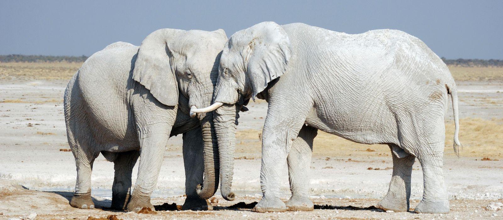 Namibia Luxusreise für Entdecker Urlaub 6