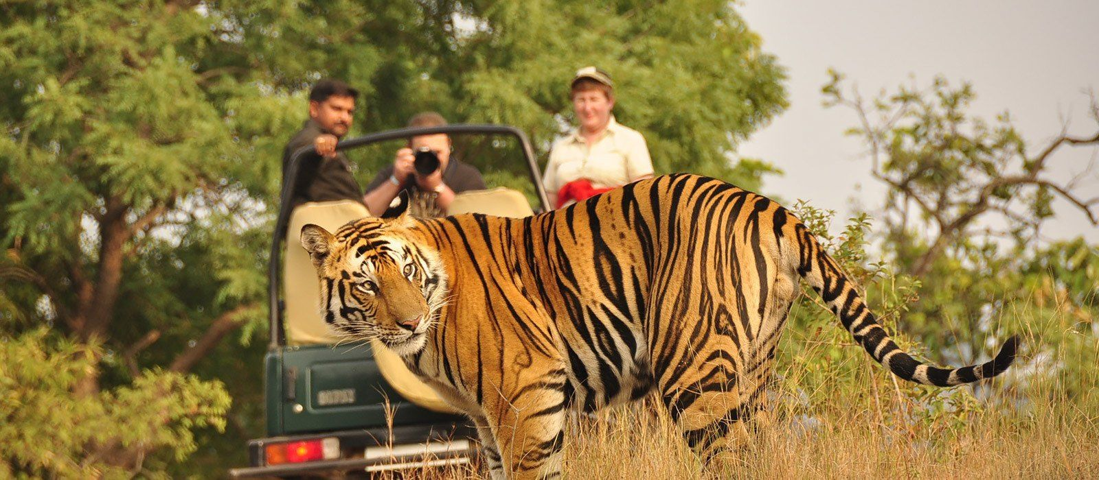 Destination Pench Central & West India