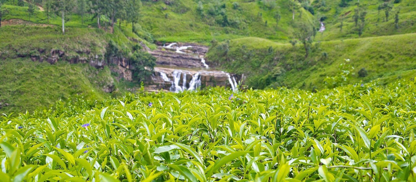 Luxuriöse Sri Lanka Rundreise Urlaub 4