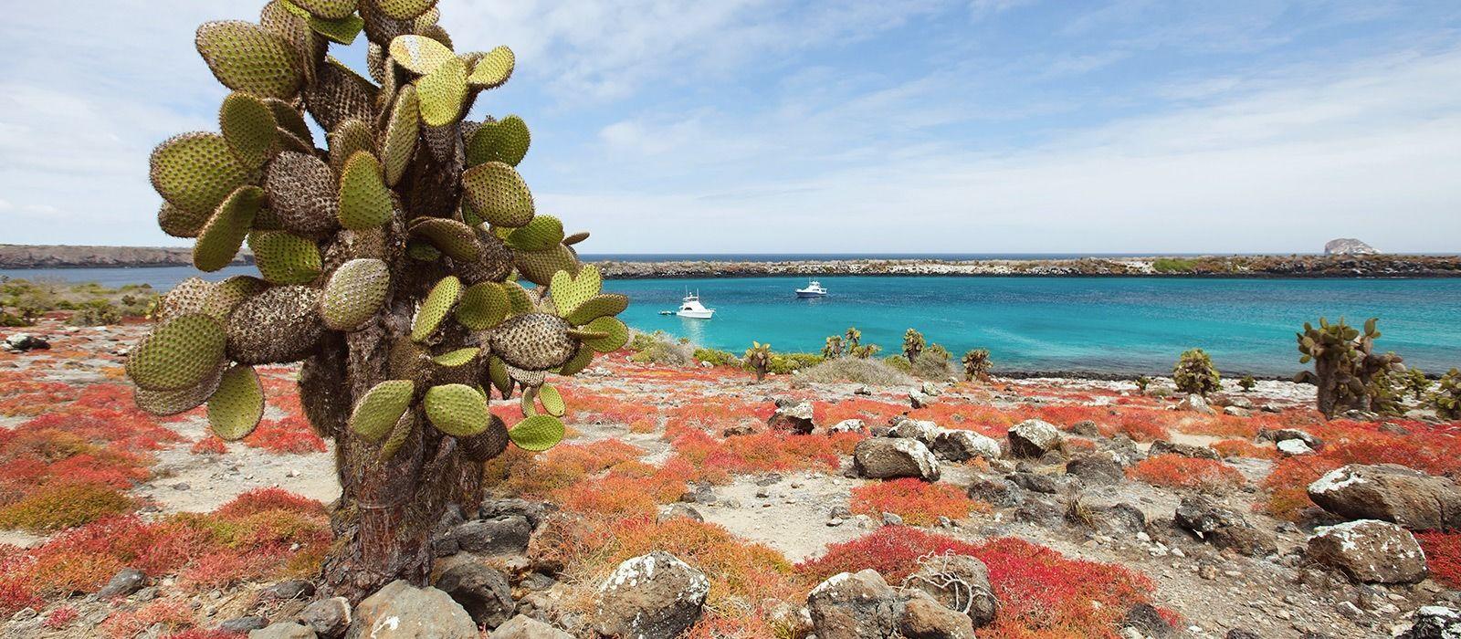 Ecuador: Galapagos Safari & Volcano Alley Tour Trip 1