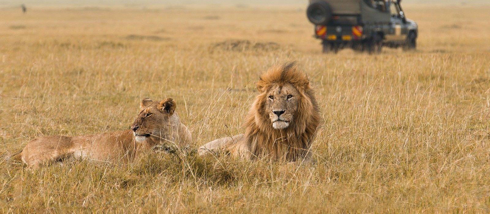 Kenia Hautnah: Safari Höhepunkte Urlaub 2