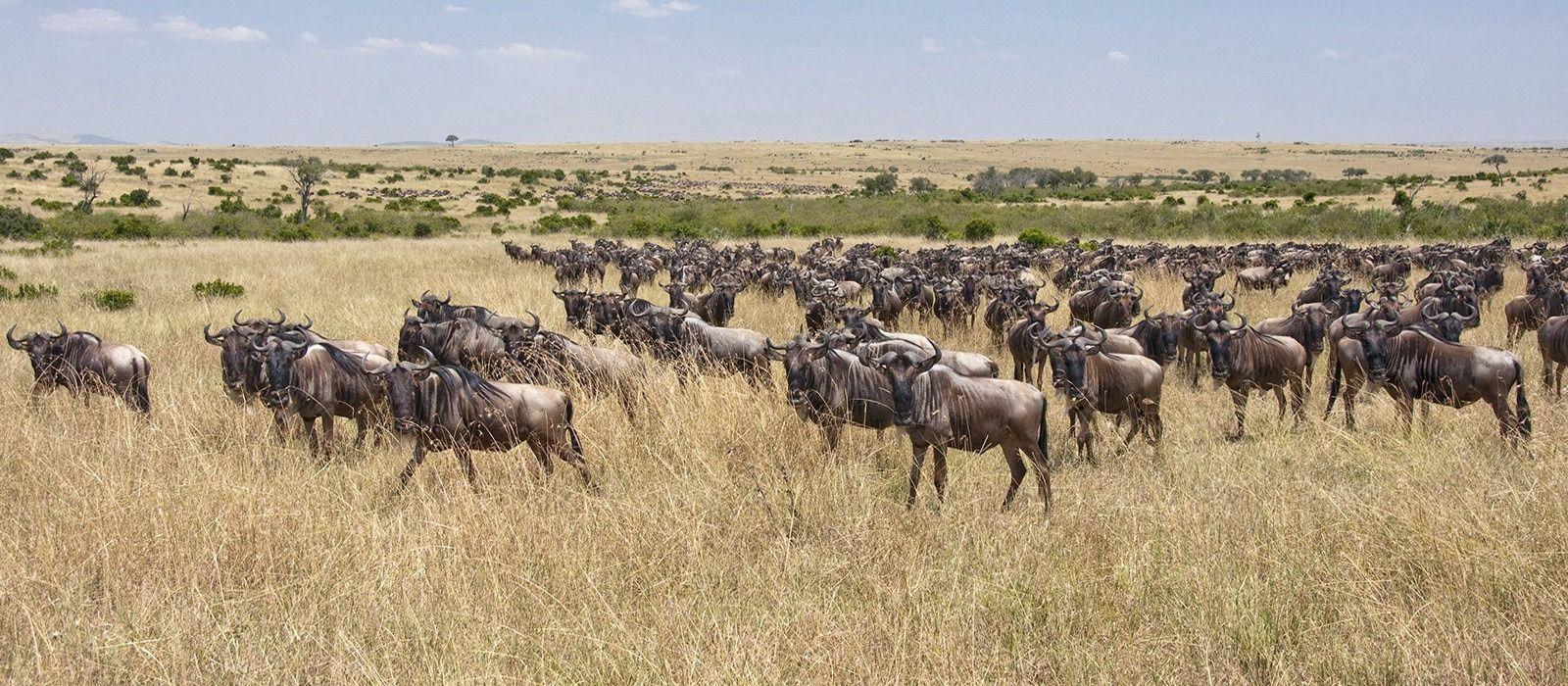 Kenia: Masai Mara, Wandersafaris & Traumstrände Urlaub 6