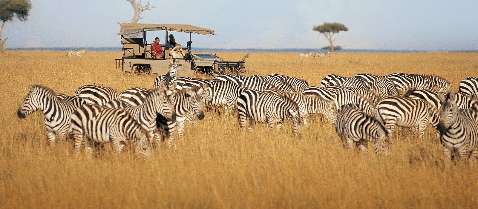 Von Kenia bis zur Gewürzinsel: Safari & Sansibar Urlaub 2