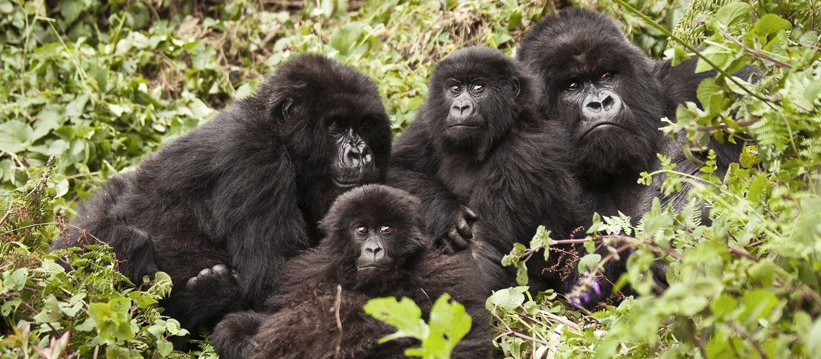 Kenia & Ruanda: Herzklopfen beim Gorilla Tracking Urlaub 5