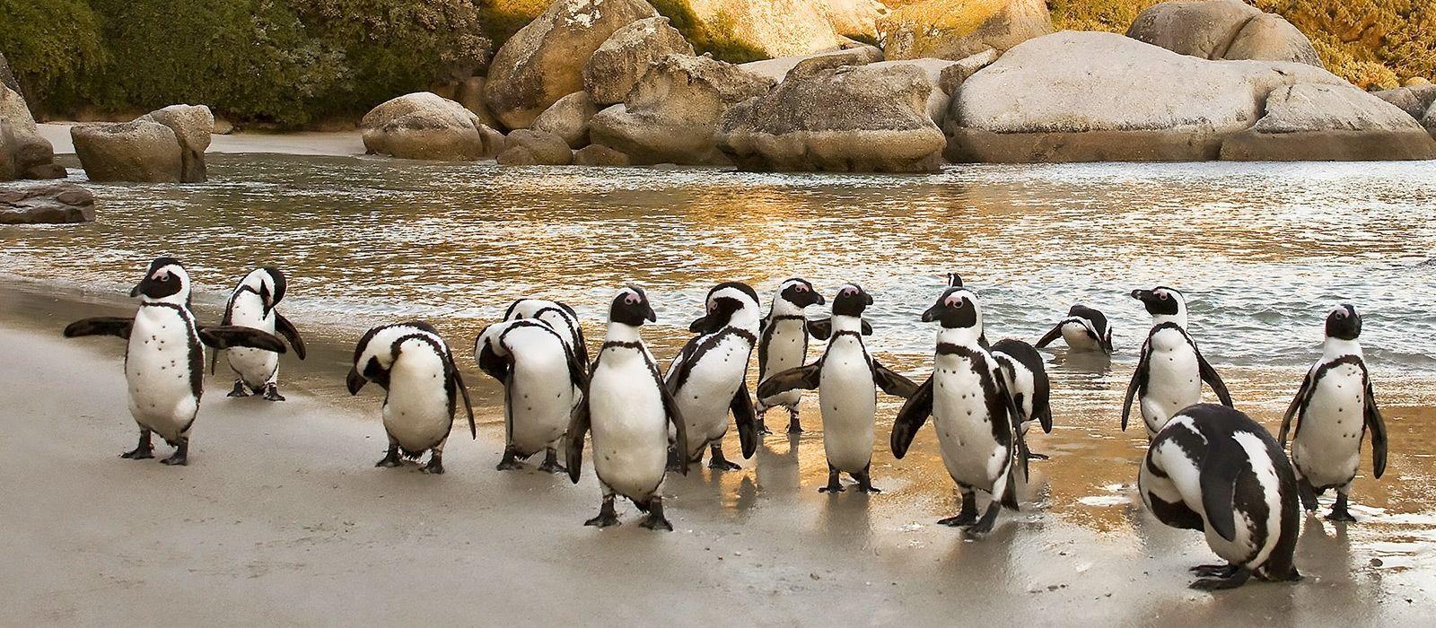 Südafrika, Simbabwe & Botswana: Magische Wasserwelten & Abenteuer Rovos Rail Urlaub 5