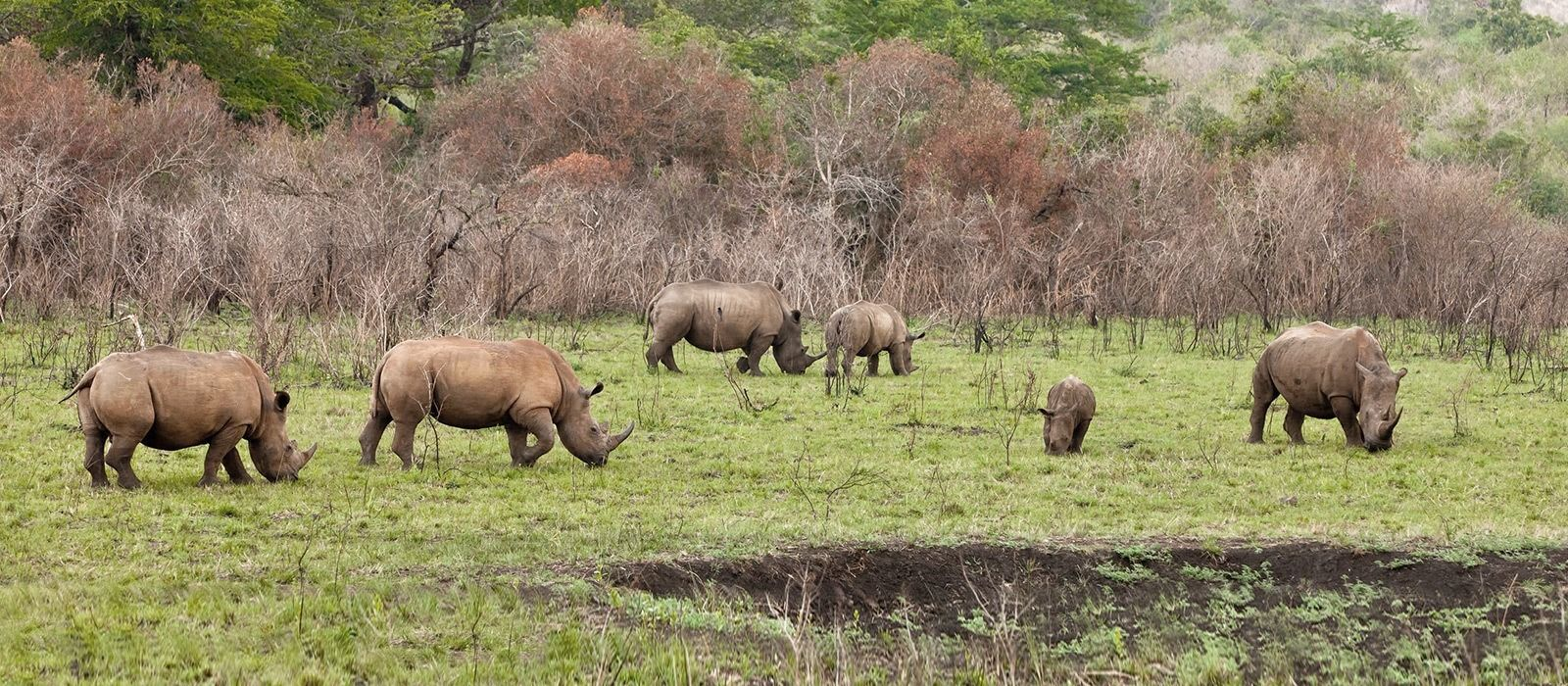 Destination Eastern Cape Game Parks South Africa