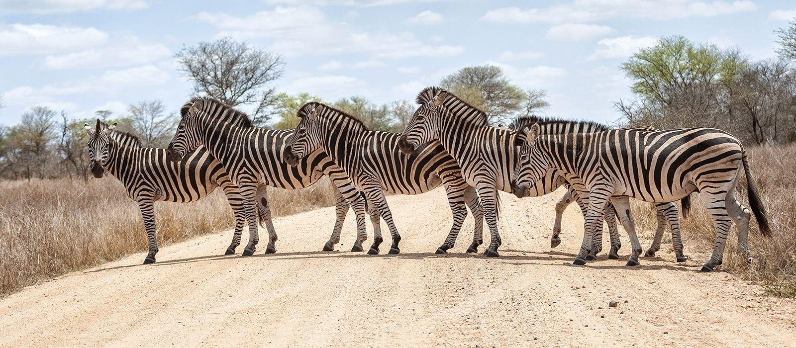 Safaris & Inselparadiese im südlichen Afrika Urlaub 2
