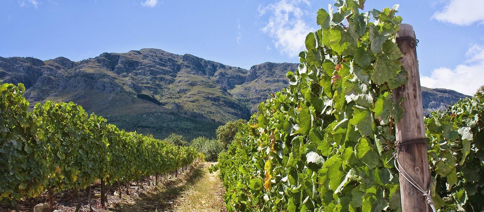 Südafrika Rundreise: Höhepunkte der Kapregion Urlaub 2