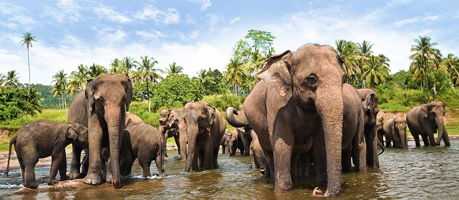 Sri Lanka – Regenwald, Tierwelt und historische Tempel Urlaub 1