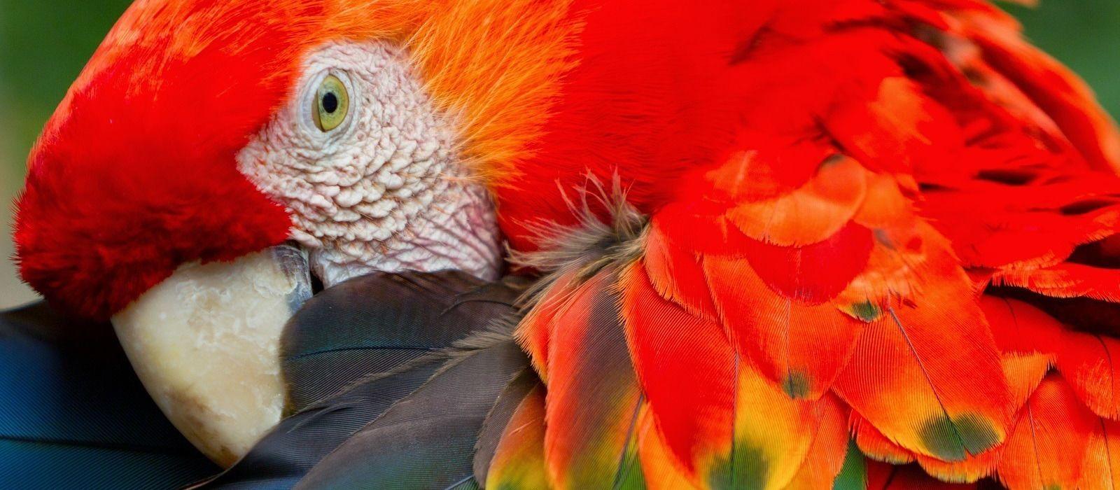 Peru Erlebnisreise: Die Anden und der Amazonas Urlaub 10